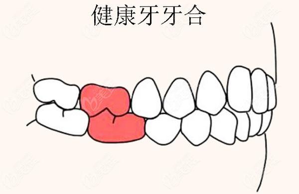 健康牙的咬合关系图