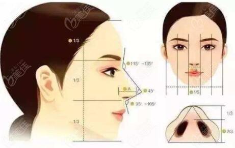 隆鼻遵循的审美设计原则理念