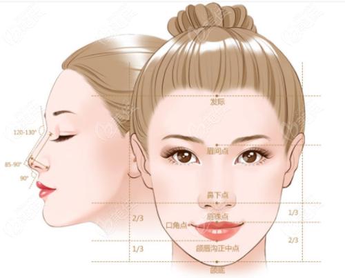 于双全隆鼻标准图
